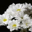 Bouquet of nice white flowers — Stock Photo