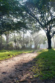 Mystical path in tropical forest — Stock Photo
