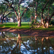 Mystical lake in morning park — Stock Photo