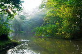 Mystical lake in morning forest — Stock Photo