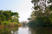 Mystical lake in tropical forest — Stock Photo