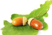 Two acorns on the leaf — Stock Photo