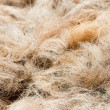 Pile of processed copra fibre — Stock Photo