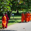 Buddhism children monks in a park — Stock Photo