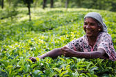 Tea picking in Sri Lanka hill country — Stock Photo