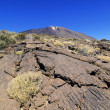 Teide National Park, Tenerife, Canary Islands, Spain - Zdjęcie stockowe