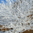 Pristine Snowcovered Tree — Stock Photo