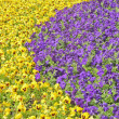Flower bed — Stockfoto