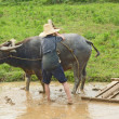 Chinese farmer guiding his buffalo to plow rice planting — Stock Photo #8679503