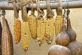 Kukurydza i suszenie owoców tykwa — Zdjęcie stockowe