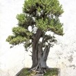 Stock Photo: Chinese green bonsai tree