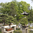 Garden with bonsai trees — Stockfoto