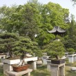 Garden with bonsai trees — Stock fotografie