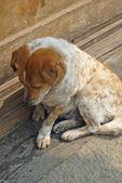 Abandoned dog — Stock Photo