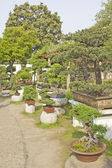 Collection of bonsai trees in a garden — Stock fotografie