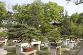 Garden with bonsai trees — Foto de Stock