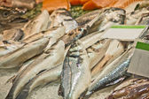 Fresh fishes — Stock Photo