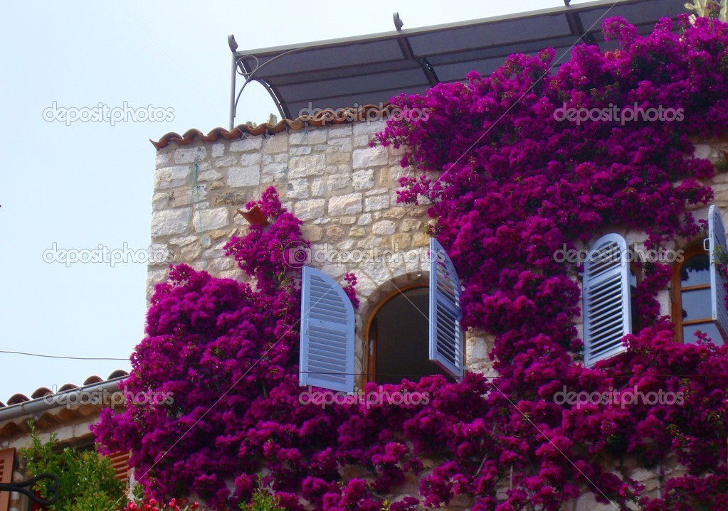 House wall full of flowers stock photo gianliguori for House of 950