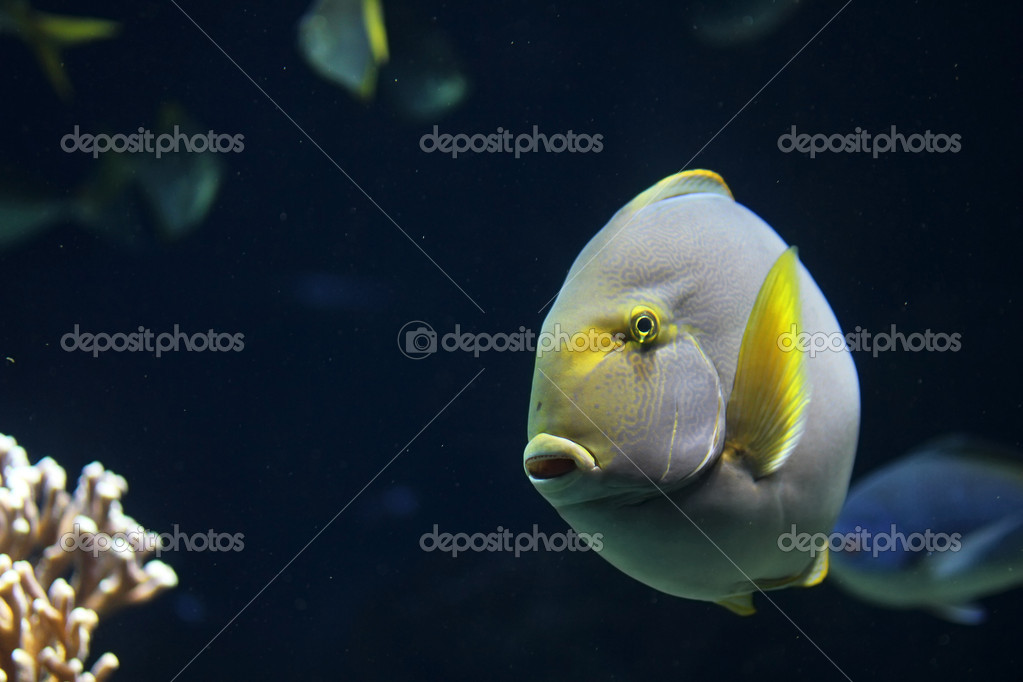 Big rounded fish — Stock Photo #9865891