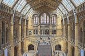 Natural History Museum, London — Stock Photo