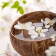 White flowers in bowl for spa - Foto Stock