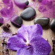 Stock Photo: Orchid flower for spa