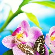 Butterfly sitting on an orchid flower — Stock Photo