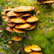 Many mushrooms growing in a forest. - Stock Photo
