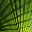 Palm leaf background. - Stock Photo