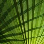 Palm leaf background. — Stock Photo #10213326