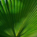 Palm leaf background — Stock Photo #10213414