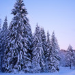 Winter landscape — Stock Photo #10213673