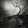 Dramatic sky over old lonely tree. - Stock Photo