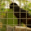 Animal in a zoo — Stock Photo #10214584