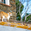Cat on a roof - Stock Photo