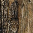 Wooden background — Stock Photo #10214781