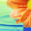 Stock Photo: Orange flower