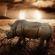 Stock Photo: Rhino in a desert storm
