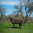 Black horse — Stock Photo #10215094
