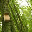 Starling-house on a tree in a forest. - Stock Photo