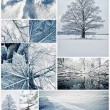 Winter collage — Stock Photo #10215294