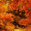 Autumn park. - Stock Photo