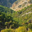 Beautiful mountain forest landscape — Stockfoto