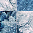 Winter collage — Stock Photo #10215456