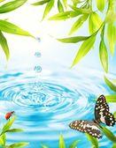 Vatten droppar folling från en bambu blad — Stockfoto