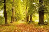 Alley in a autumn forest. — Stock Photo