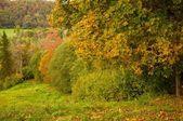Beautiful autumn forest. — Stock Photo