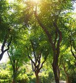 Prachtig park — Stockfoto