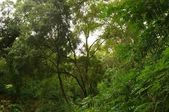 Beautiful tropical forest. — Stock Photo