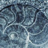 Tle starodawny ślimak — Zdjęcie stockowe